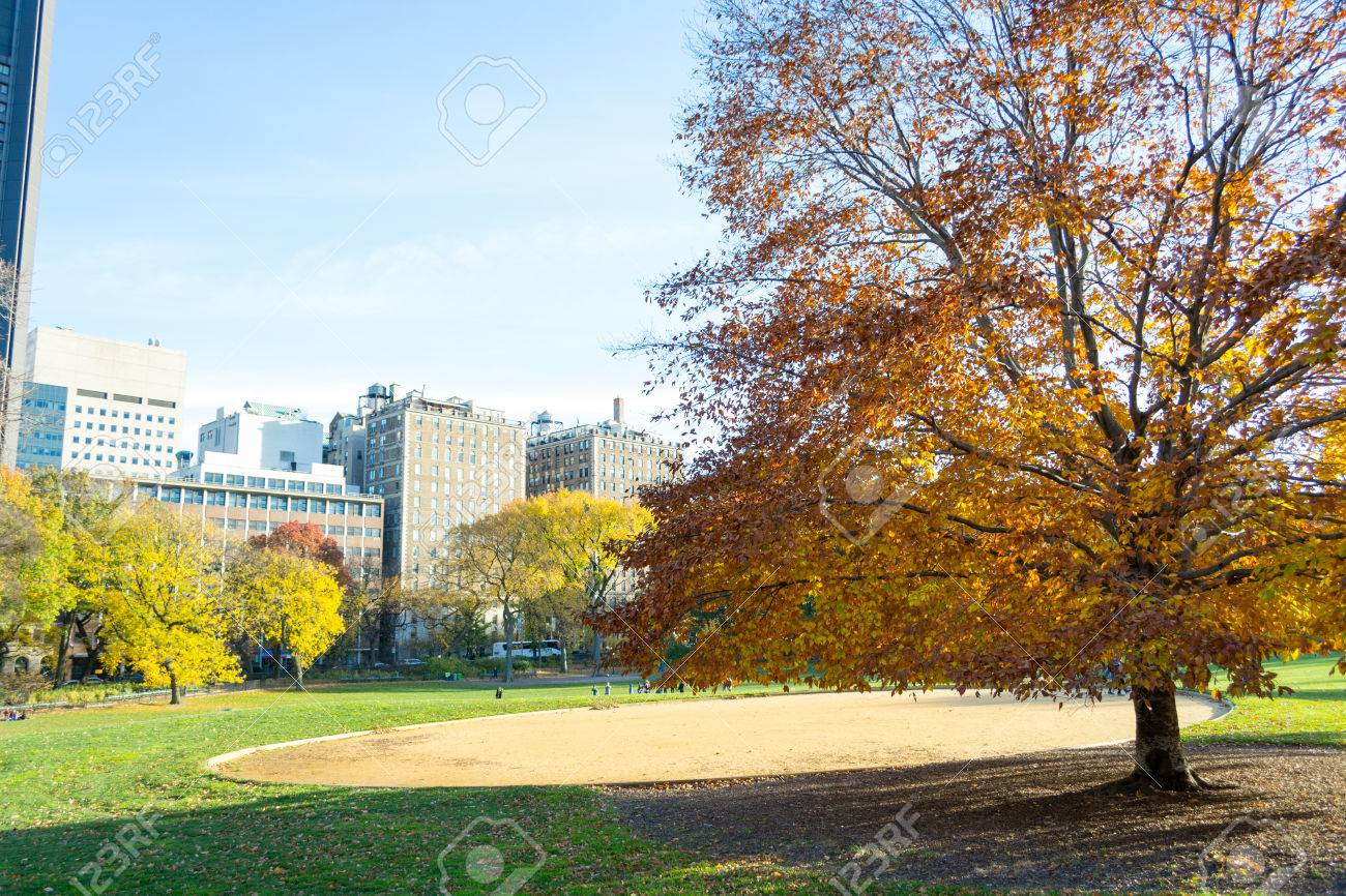 Lawn in Central Park by the Mount Sinai School of Medicine