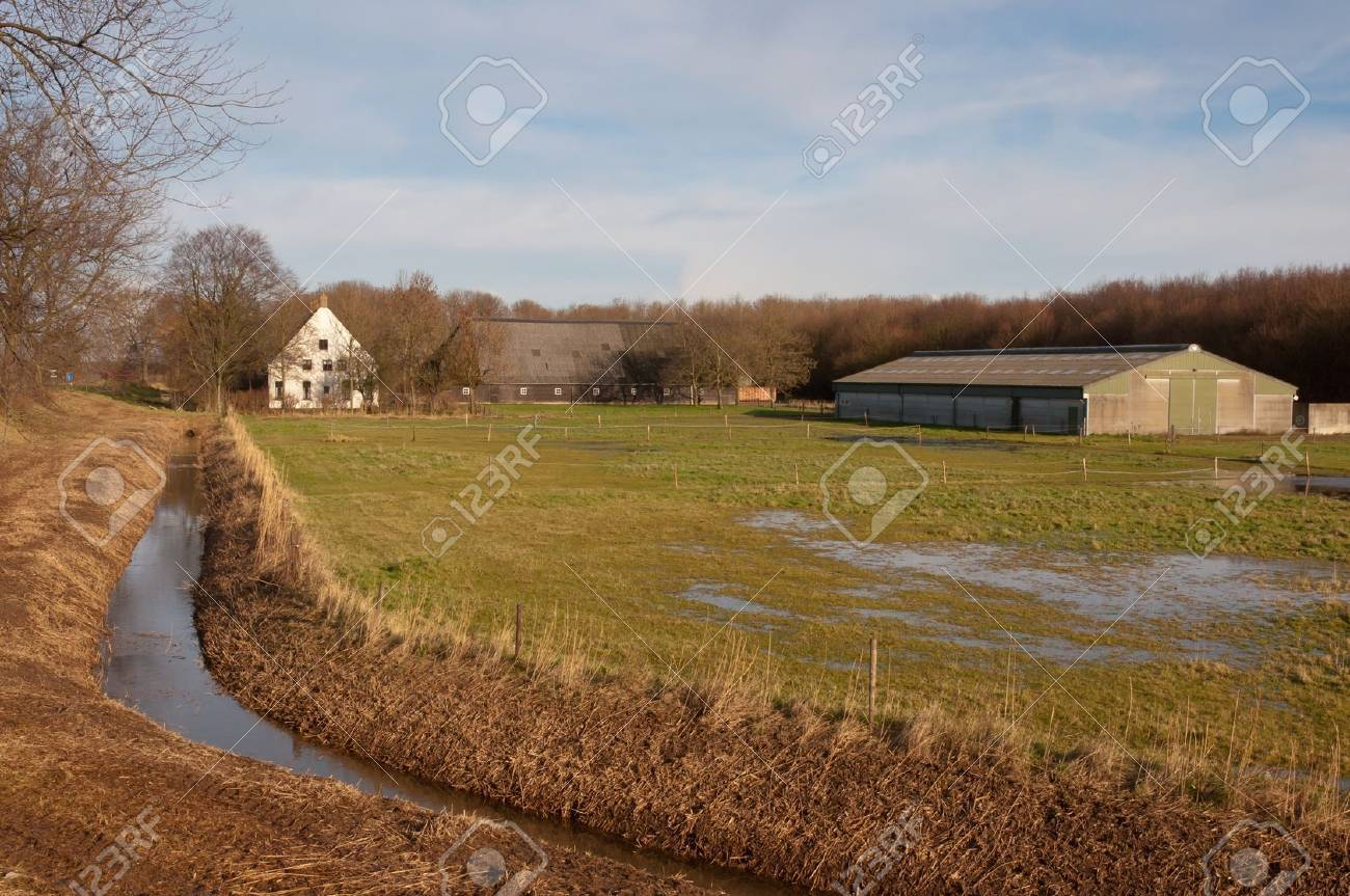 Farm and stable in a rural countryside in the Netherlands. It is winterand there are puddles on the pitch. - 11768409