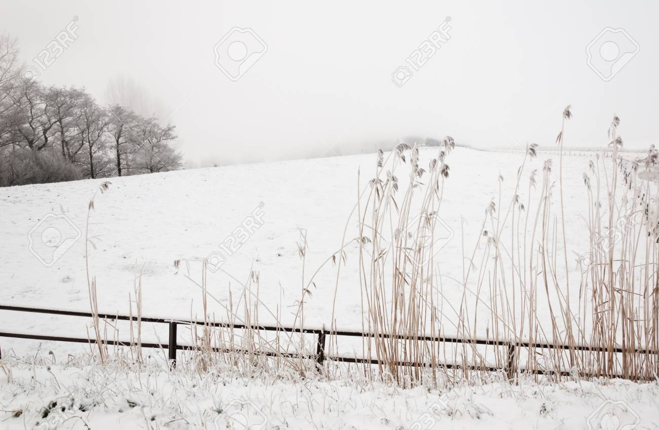 Snowy winter landscape with a fence and rushes in the foreground. It is very early in the morning and it freezes very much in the Netherlands. The morning mist still hangs over the landscape. The view is very limited and less colorful. Stock Photo - 12307225