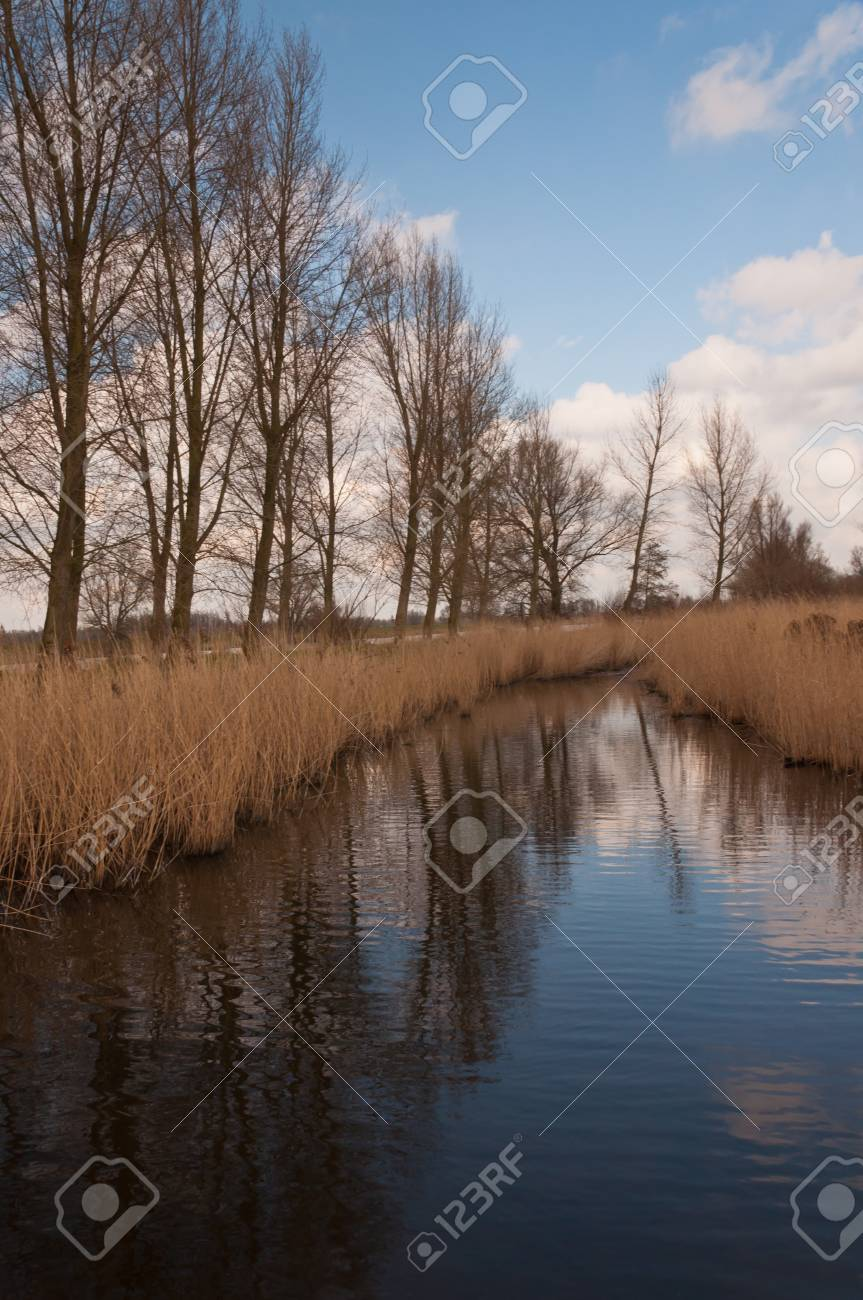 Creek with reed and a row of bare trees in the Dutch National Park De Biesbosch (North-Brabant). Stock Photo - 12680847