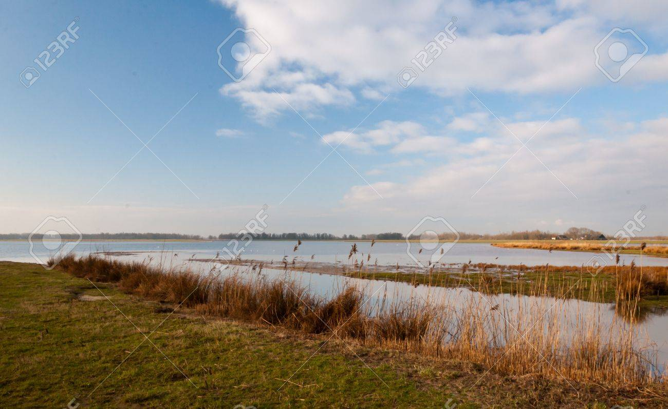 Dutch National Park De Biesbosch in winter colors. Stock Photo - 12680854