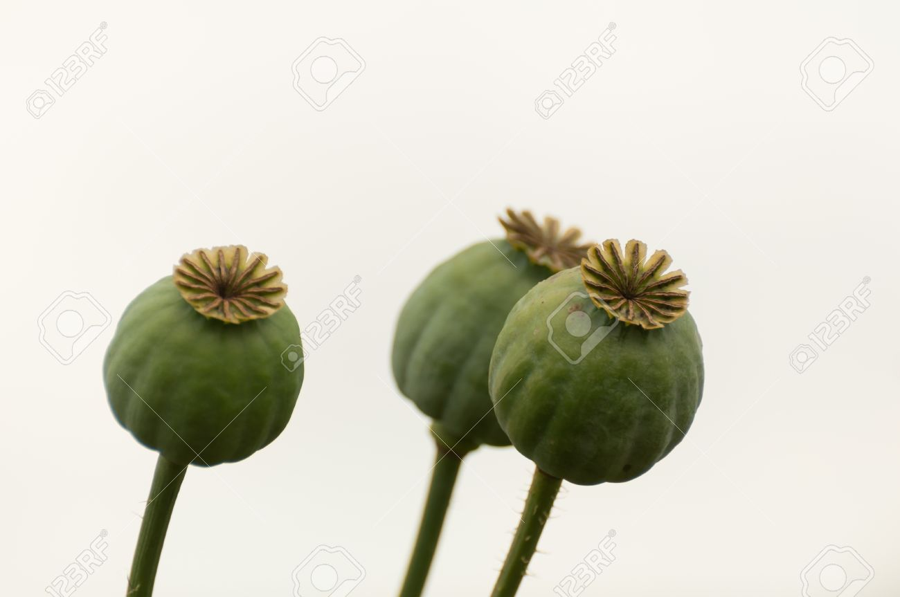 Composition Of Three Poppy Seed Pods Against A White Background