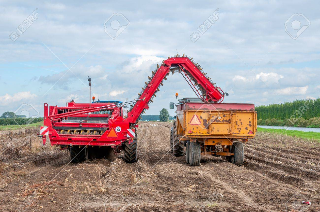Harvesting potatoes in autumn at a Dutch potato field. Stock Photo - 15605073