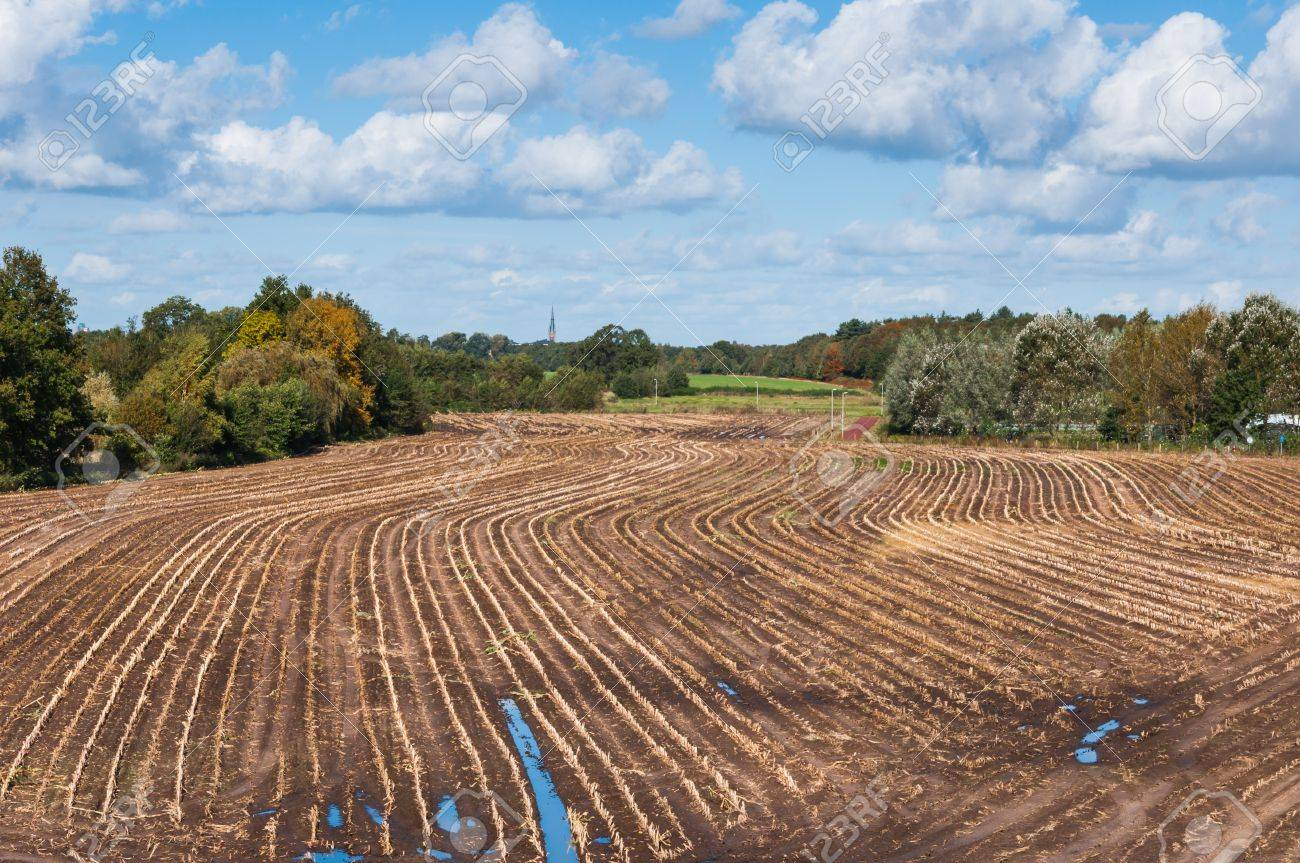 Dutch stubble field of harvested maize with curved rows in autumn Stock Photo - 15848277