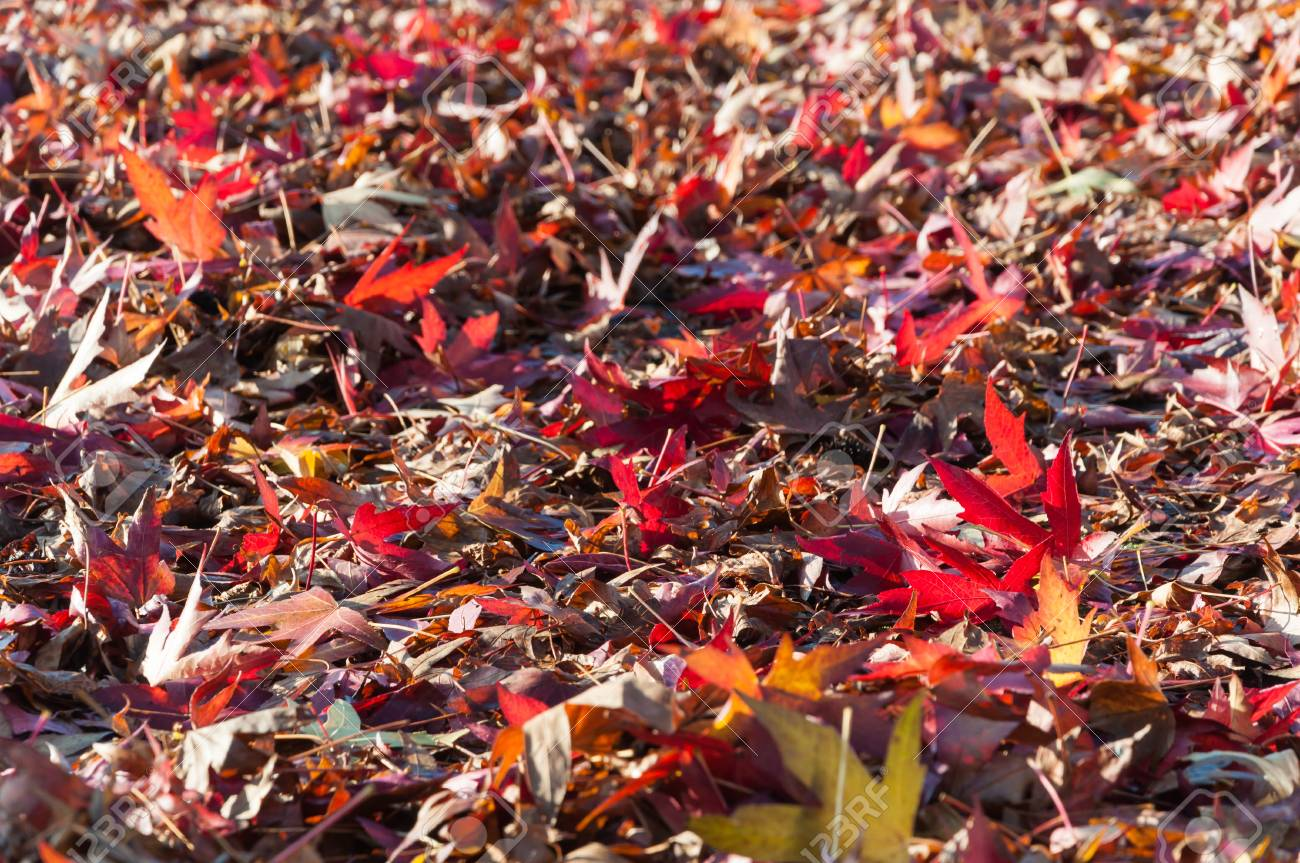 Collection of fallen leaves in various autumn colors. Stock Photo - 16488739