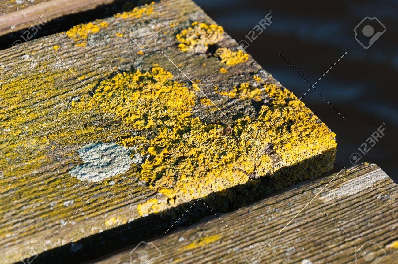 Detailed picture of an old bridge of planks covered with yellow and white moss. Stock Photo - 16505260