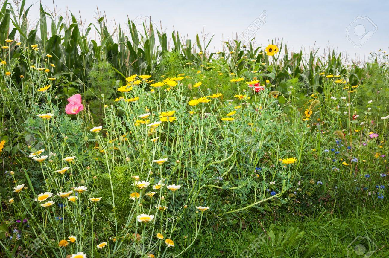 Wildflowers Of Various Types And Colors Along The Rim Of A Silage ...
