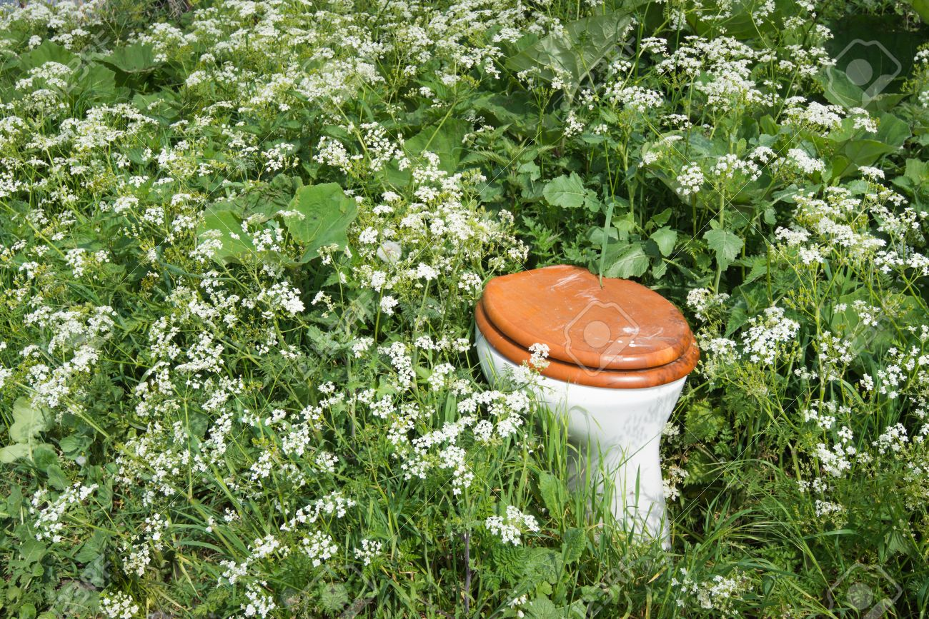 Toilet bowl with wooden toilet seat and lid dumped in th wild flowers and plants of a nature area Stock Photo - 28038738