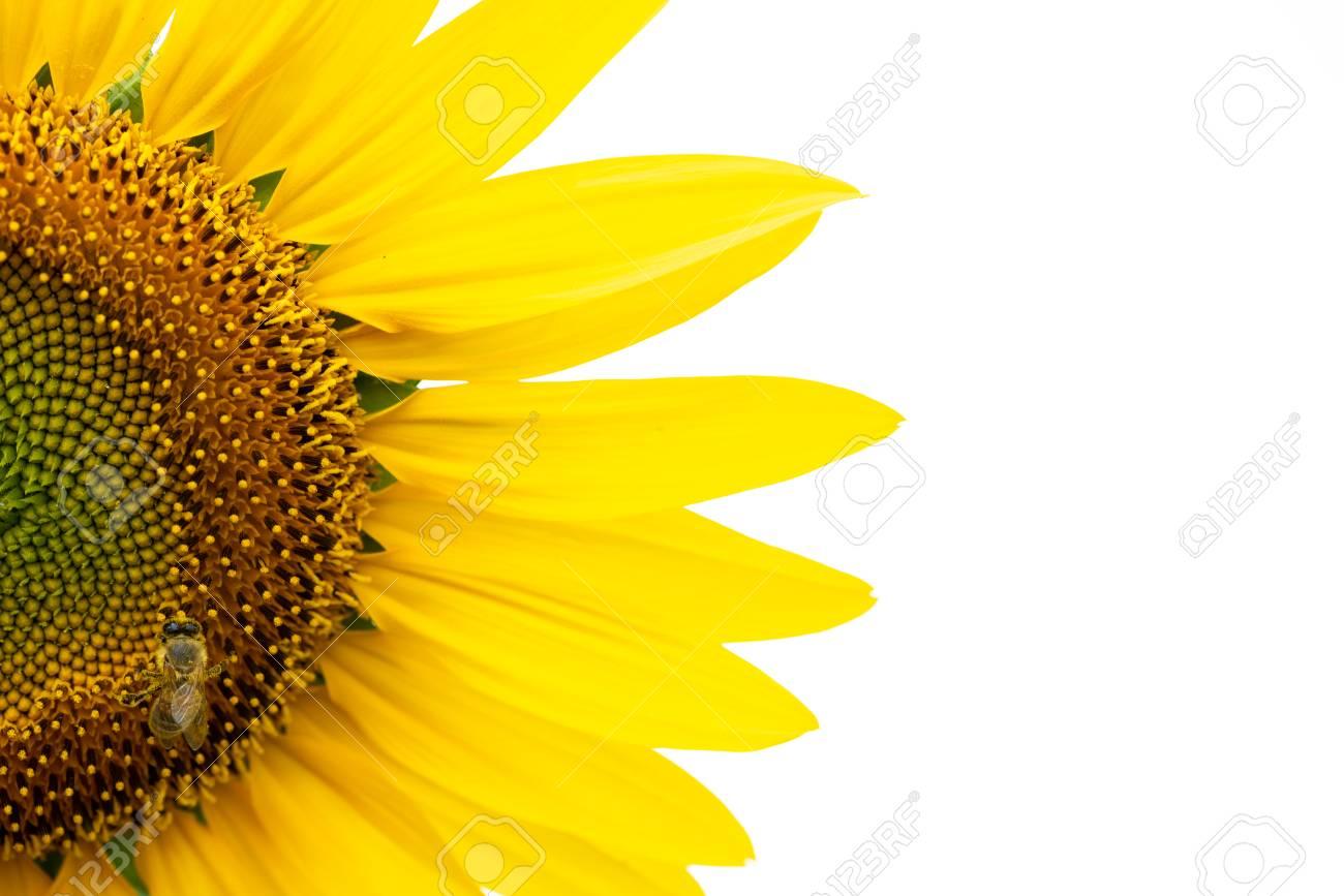 Sunflower with bee macro photo - 114833058