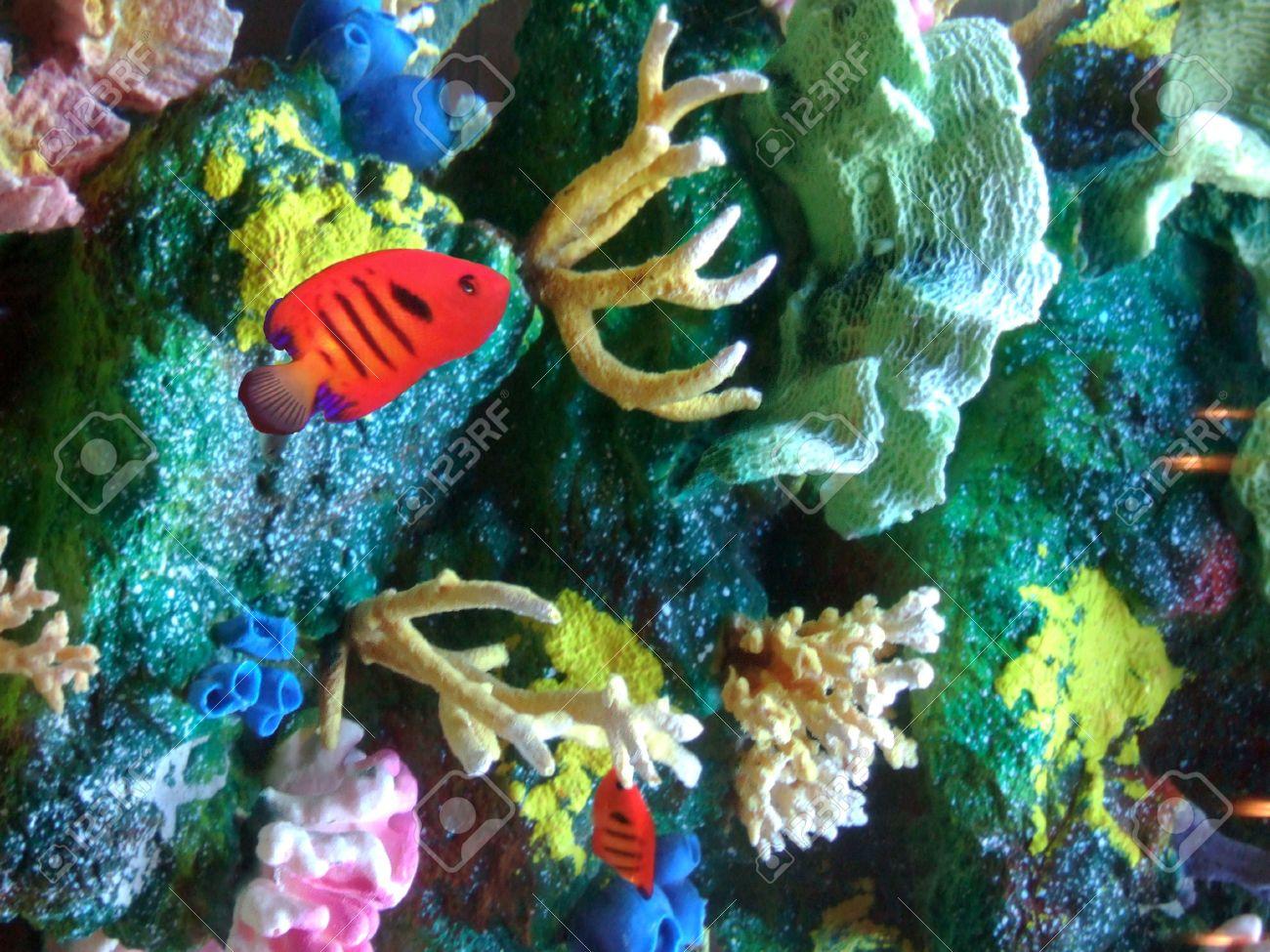 Aquarium Containing Bright Red Fish, Colorful Coral Rocks And ...