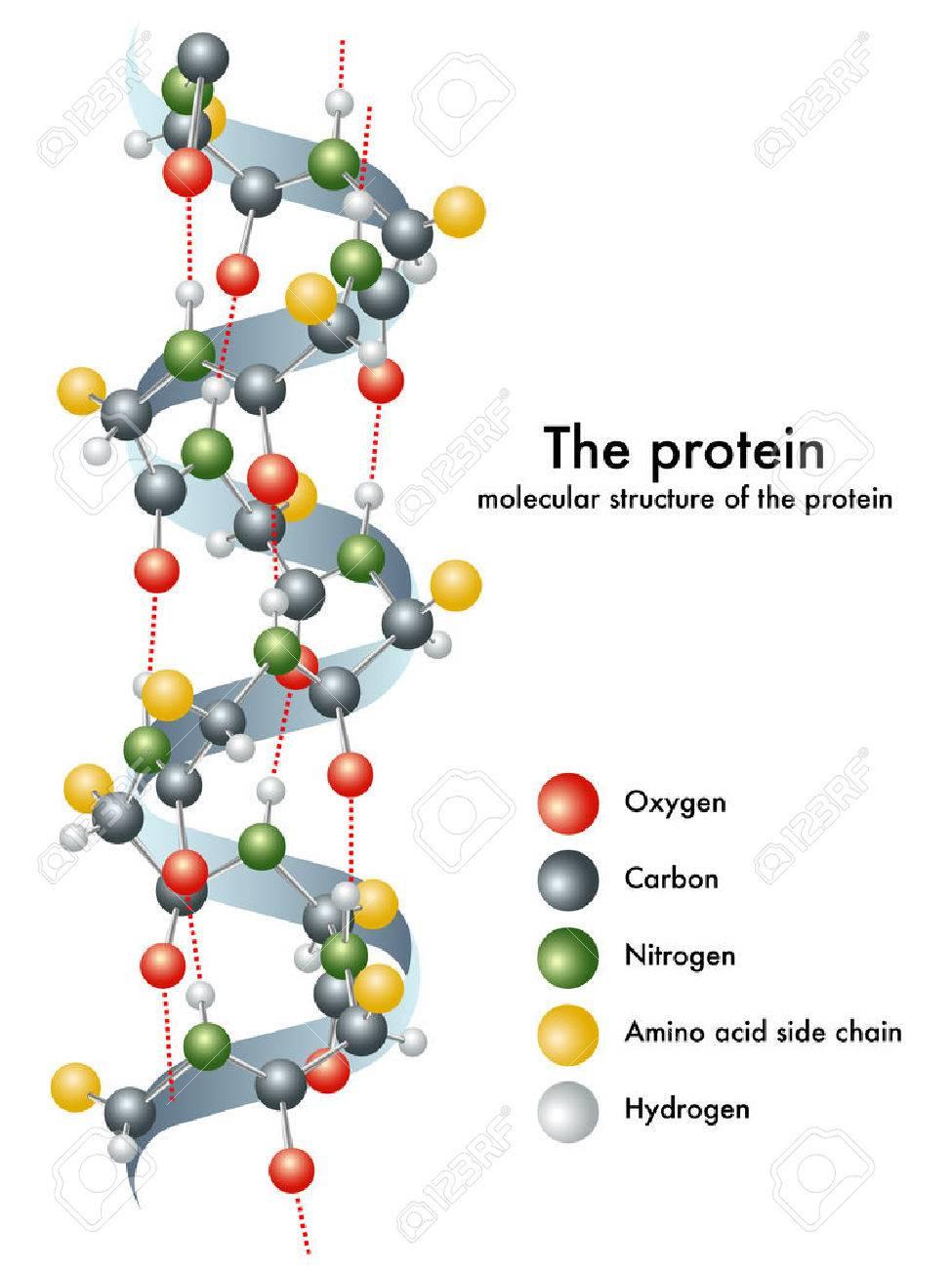 protein - 27708809