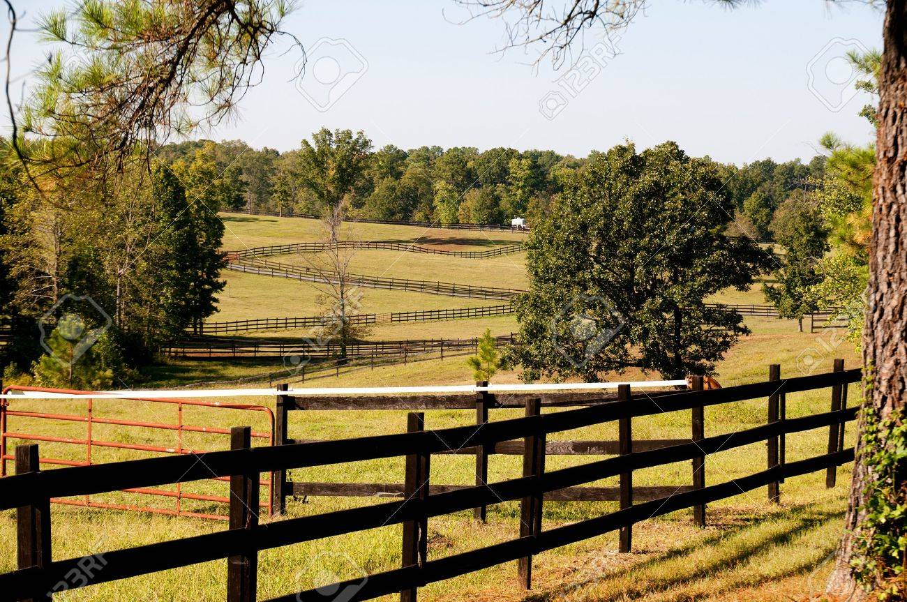 The fence on a large horse pasture Stock Photo - 8046582