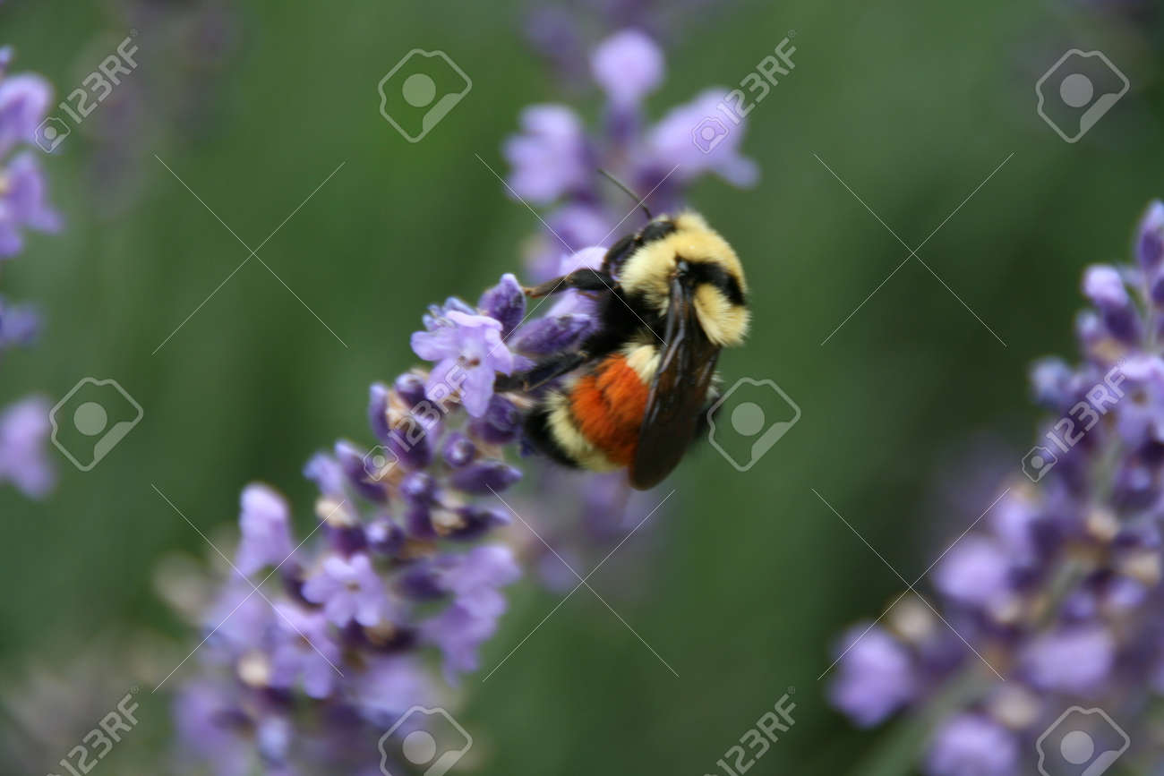 Honey Bee on Flower photo pinned by Western Sage and KB Honey