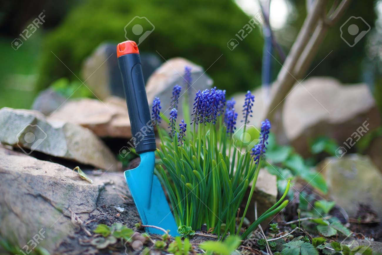 Hyacinth Spring Flower Blue Hyacinth Flowers Bloom In Spring