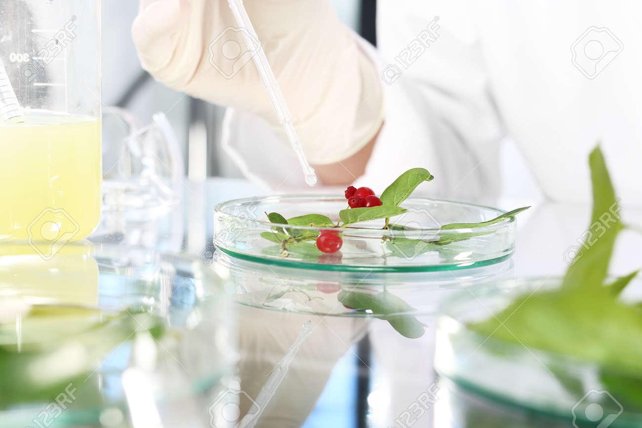 植物 バイオ テクノロジー