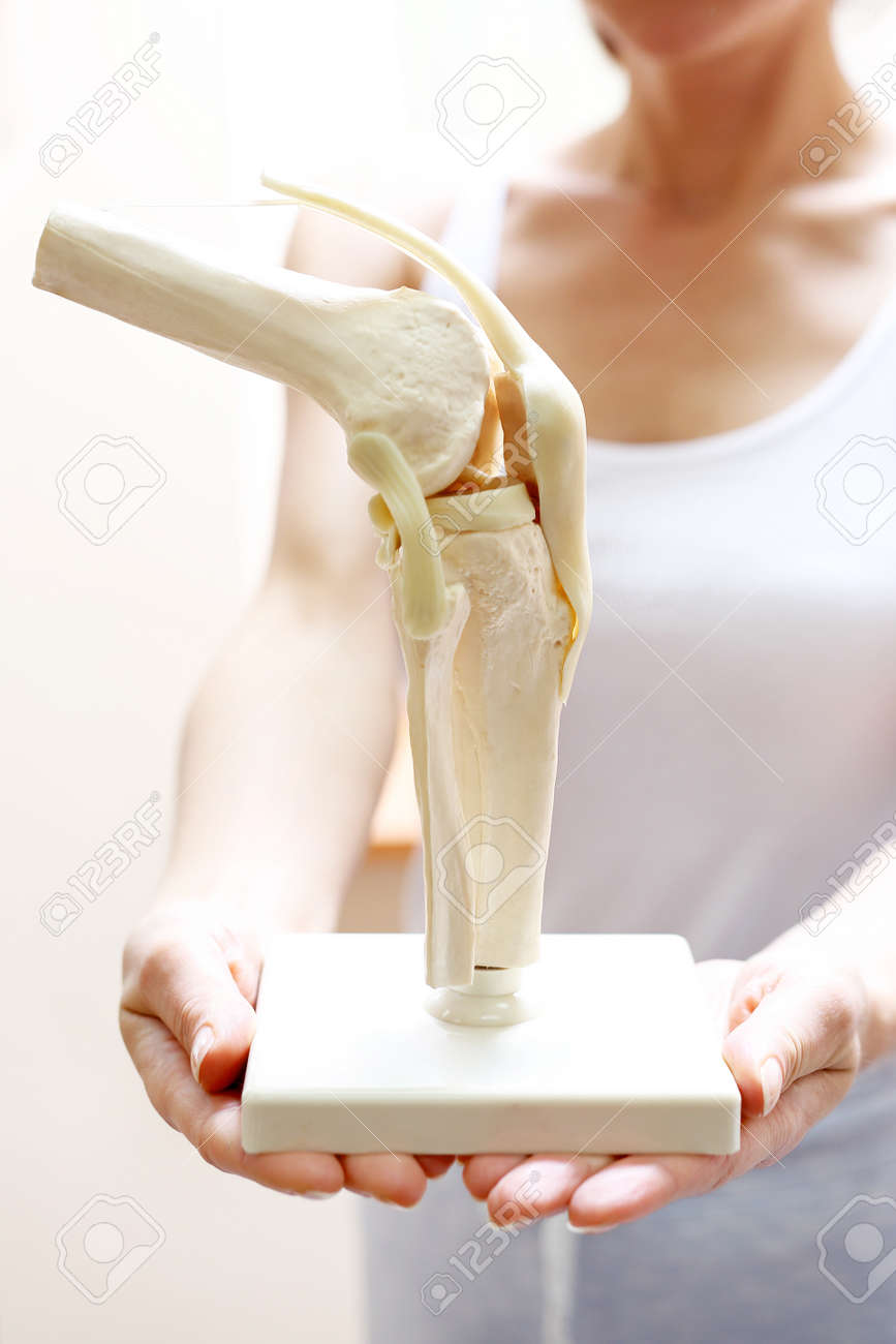 Knee anatomy an orthopedic shows an anatomical model of the stock knee anatomy an orthopedic shows an anatomical model of the knee joint stock photo ccuart Images