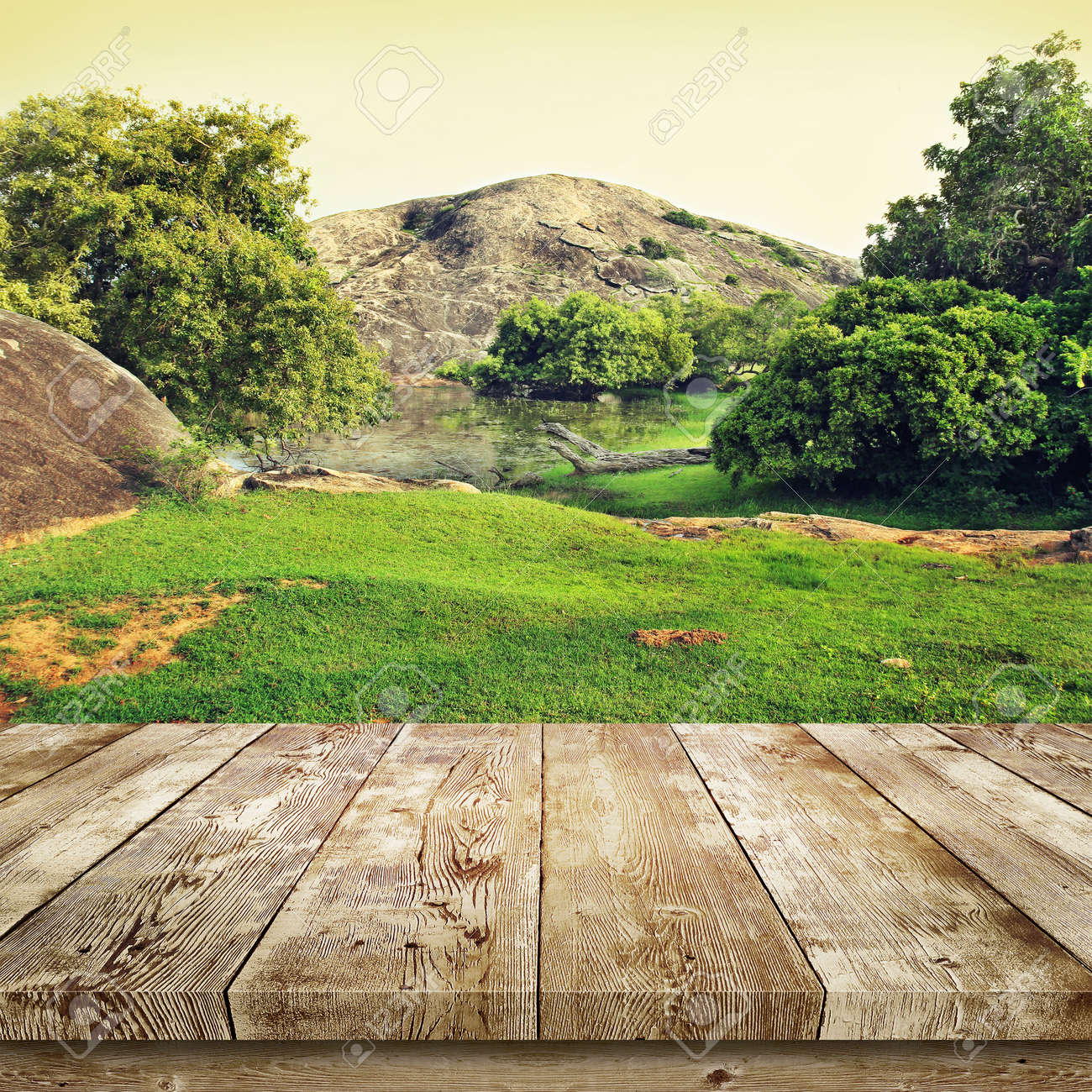 Green Grass And Trees Beauty Nature Background Standard Bild