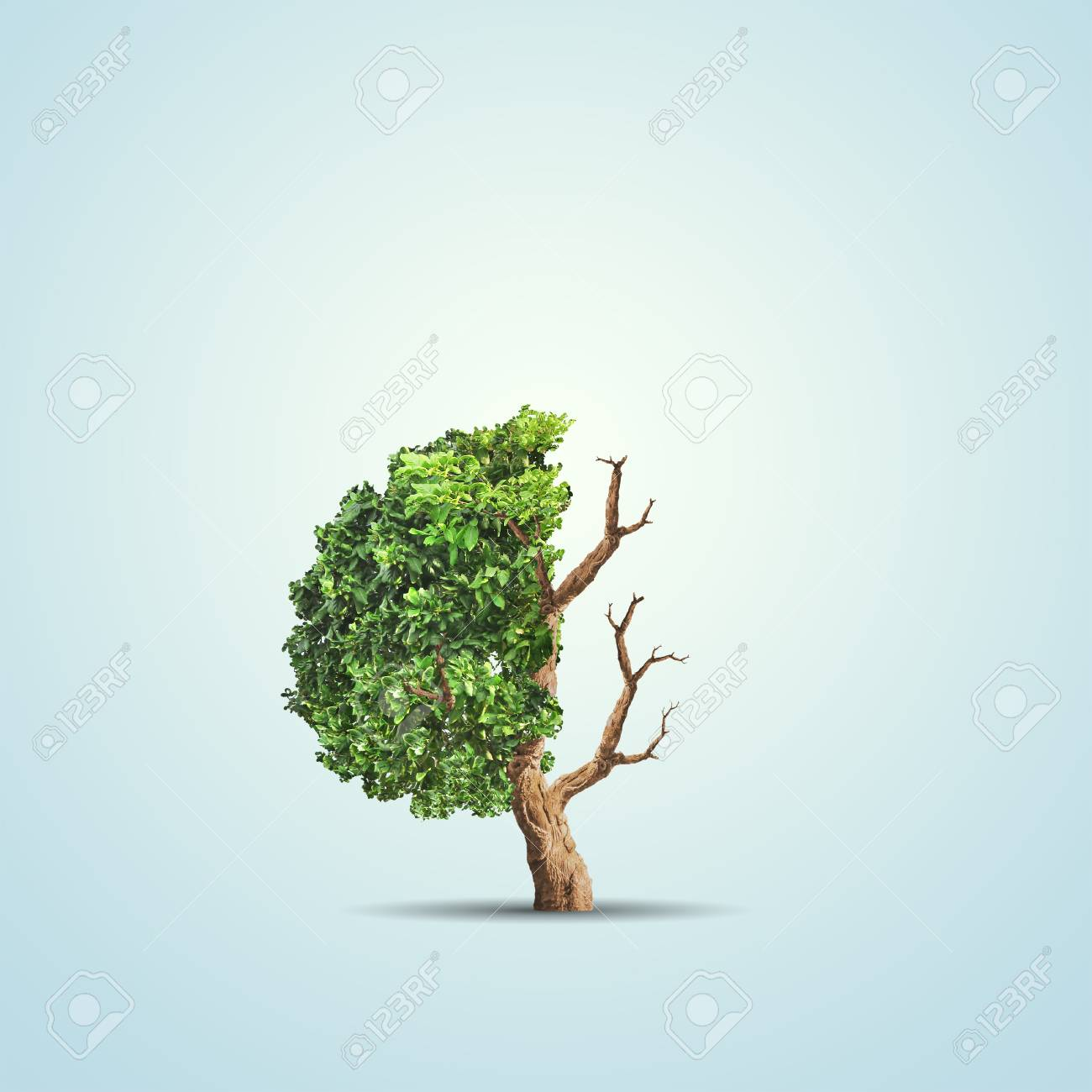 The Concept Image Of Ecology Half Alive And Half Dead Tree Stock