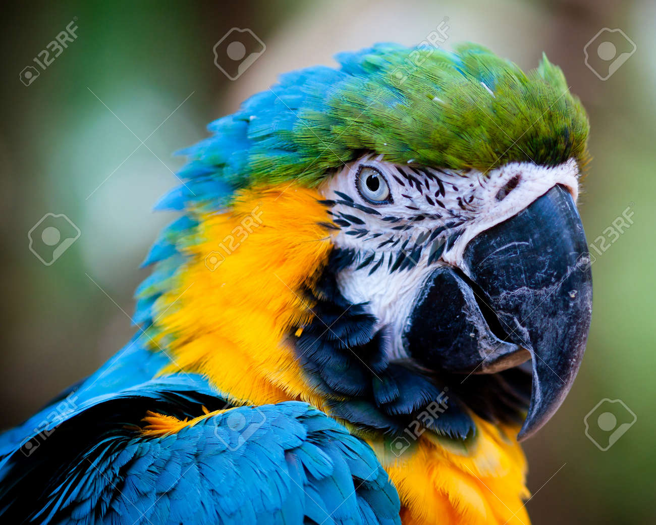 Blue and yellow macaw close up Stock Photo - 9748711