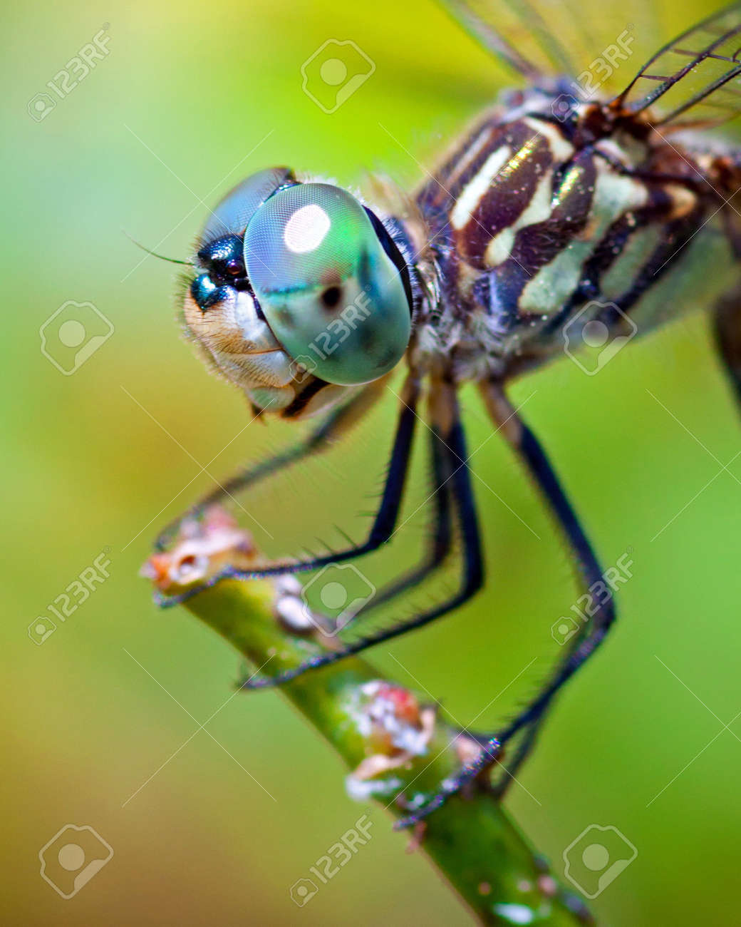 Close-Up View of Mechanical Dragonfly with Multifaceted Eyes Gears Body Print Background for Photography Kids Adult Photo Booth Video Shoot Vinyl Studio Props Dragonfly 8x10 FT Photography Backdrop