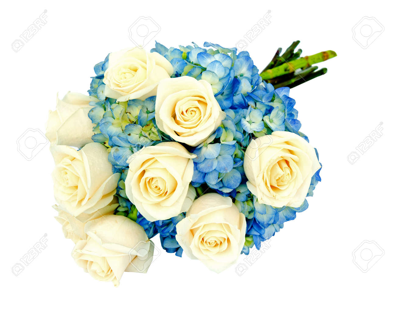 Wedding bridal bouquet flower arrangement with cream roses and stock photo wedding bridal bouquet flower arrangement with cream roses and blue hydrangea isolated on white izmirmasajfo