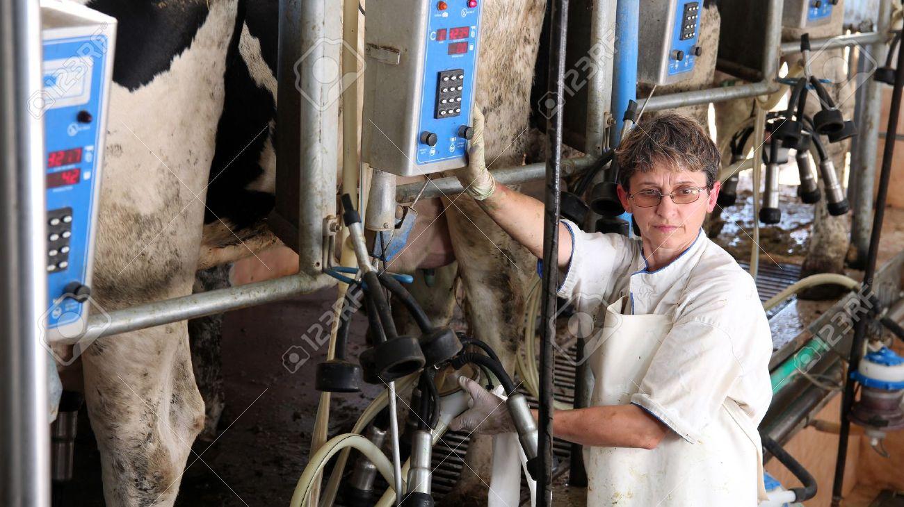 Farm worker milking cows at organic dairy farm - 14172050