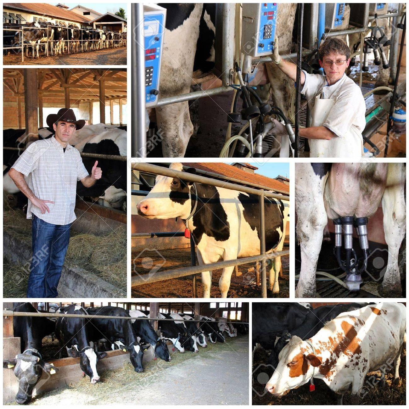 Dairy Farm - 18730296