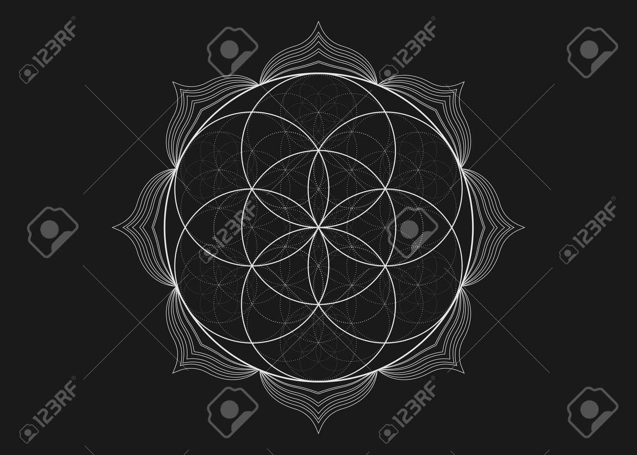 Seed Flower of life lotus icon, yantra mandala sacred geometry, tattoo symbol of harmony and balance. Mystical talisman, white lines vector isolated on black background - 173019814