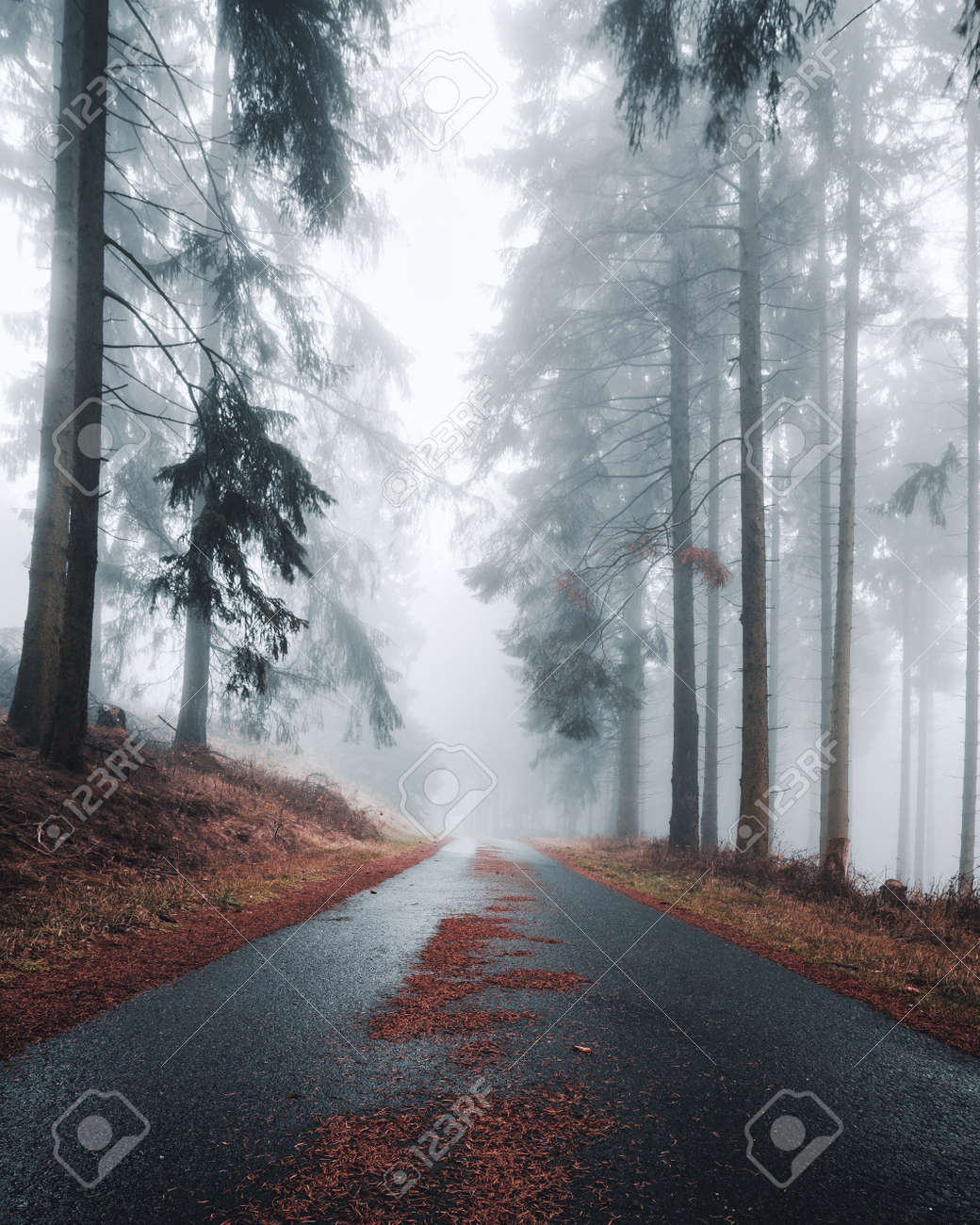 Mystical Road With Fir Needles In A Foggy And Dark Forest Creepy