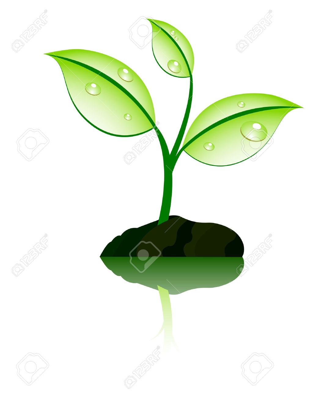 plant with reflection Stock Vector - 6670157