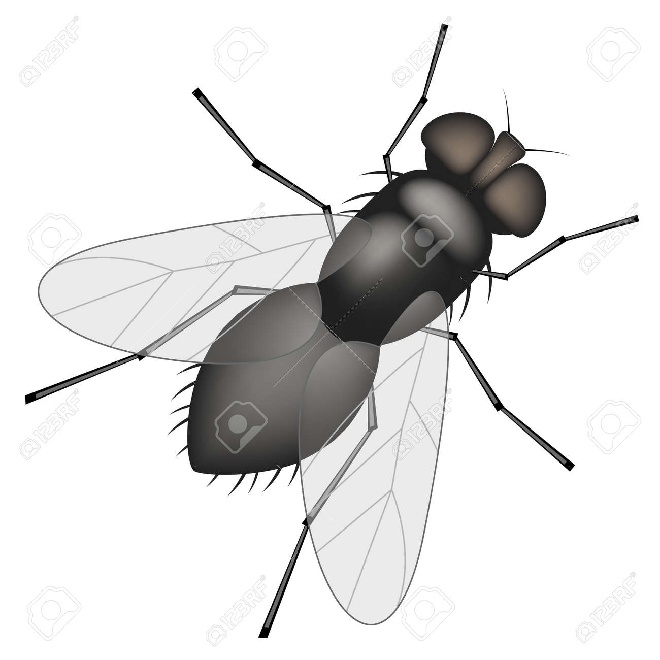 Housefly Stock Photos. Royalty Free Housefly Images