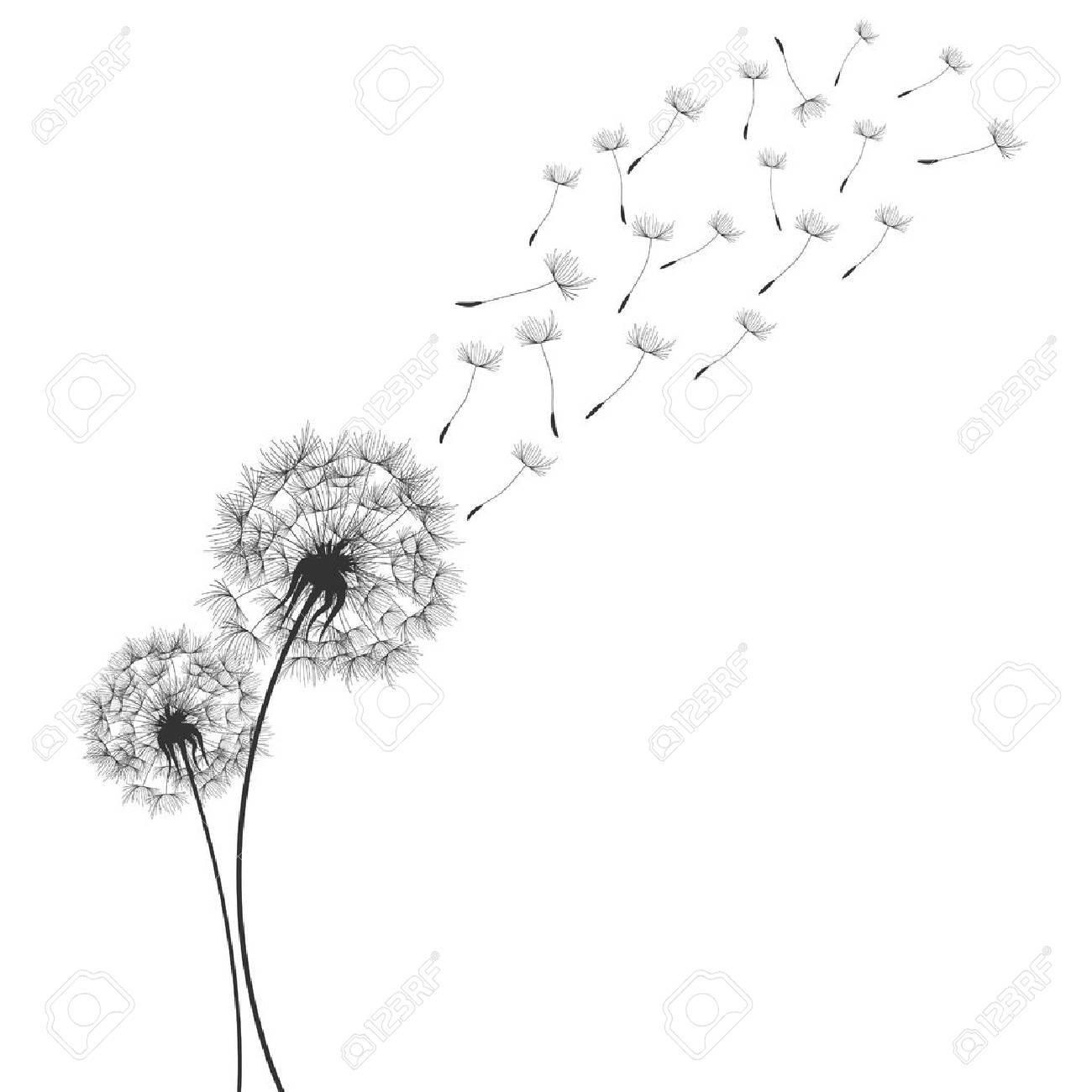 Dandelions in Wind - 60605529