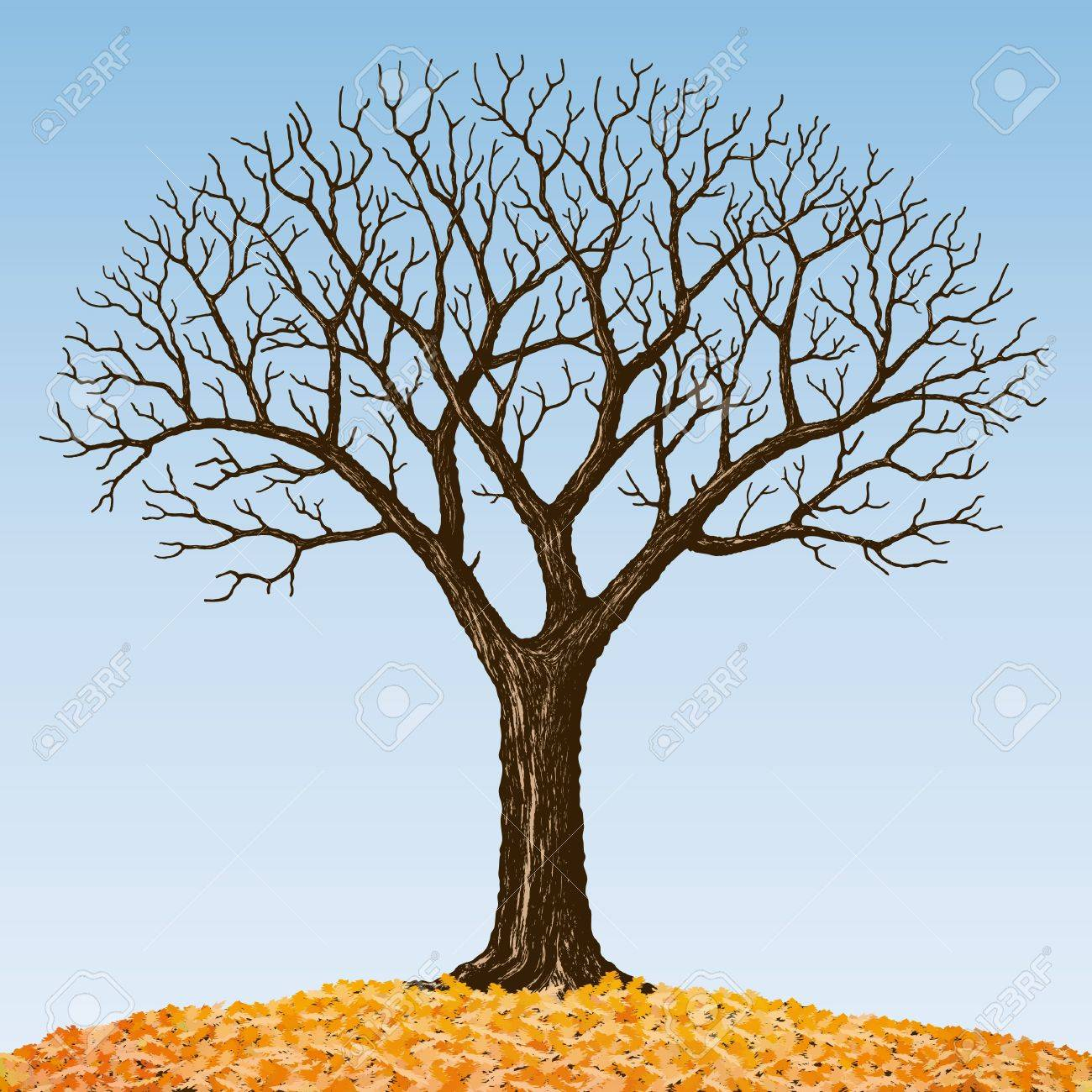Bare tree - 10526522