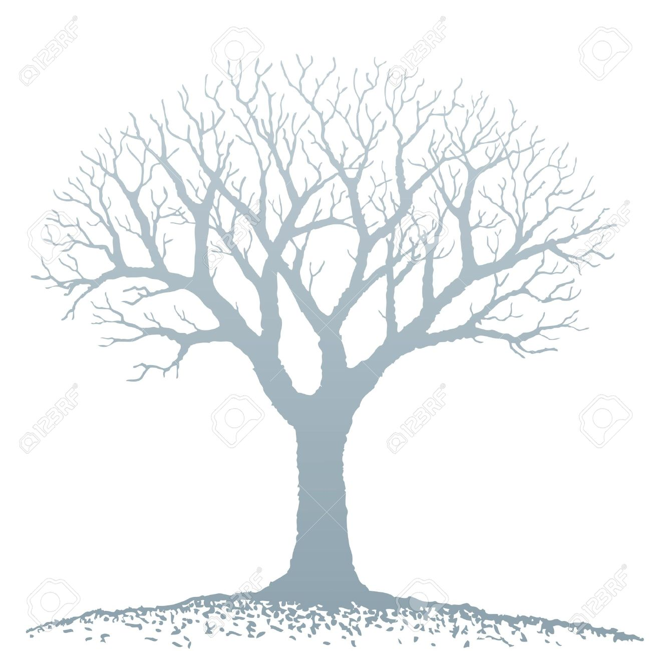 bare tree stock photos royalty free bare tree images and pictures