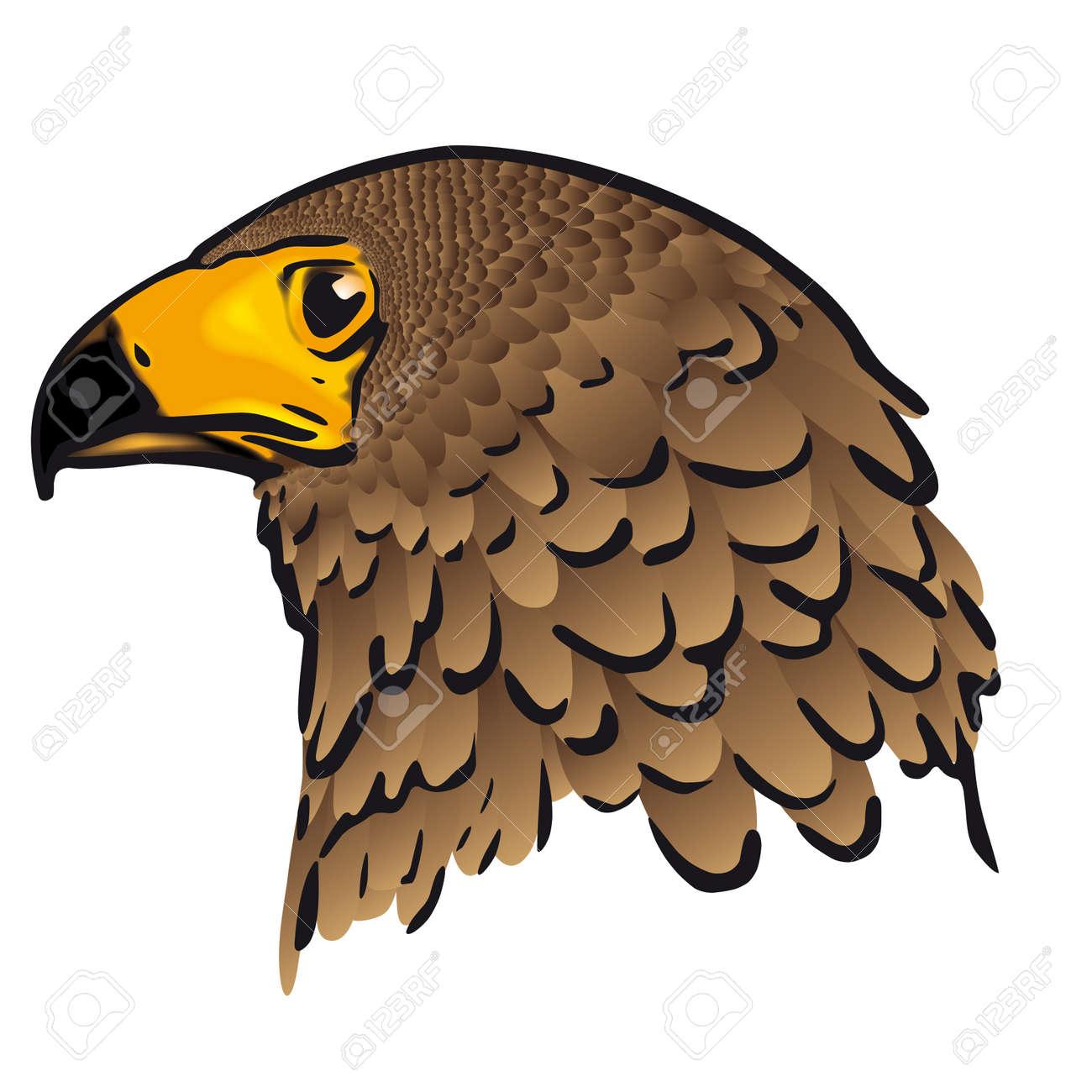 Eagle head - 10726271