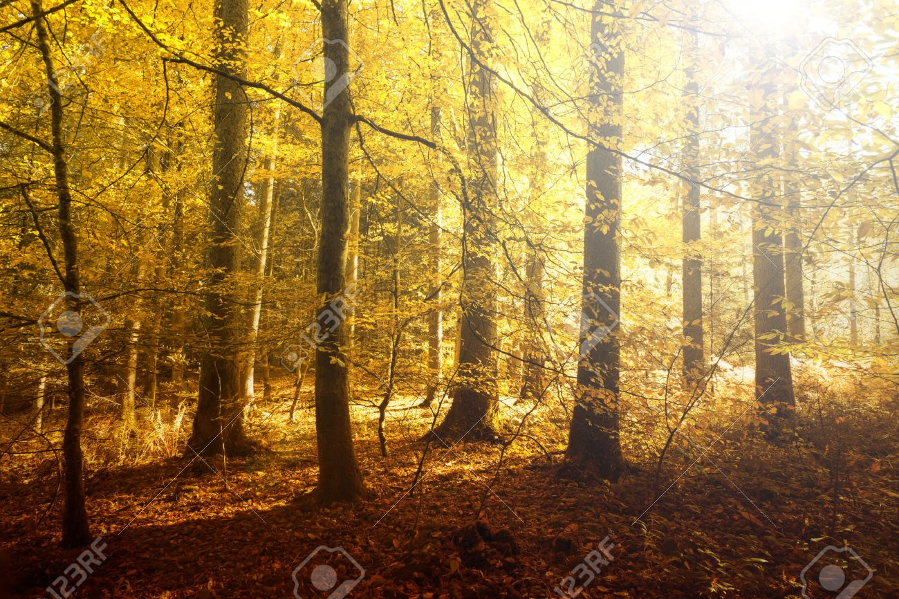 Fantasy Golden Sun Light In The Autumn Forest Landscape. Lovely Red, Orange  And Yellow