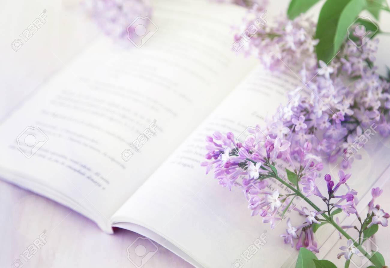 Blurred Still Life With Open Book And Pink Flowers Pink Color