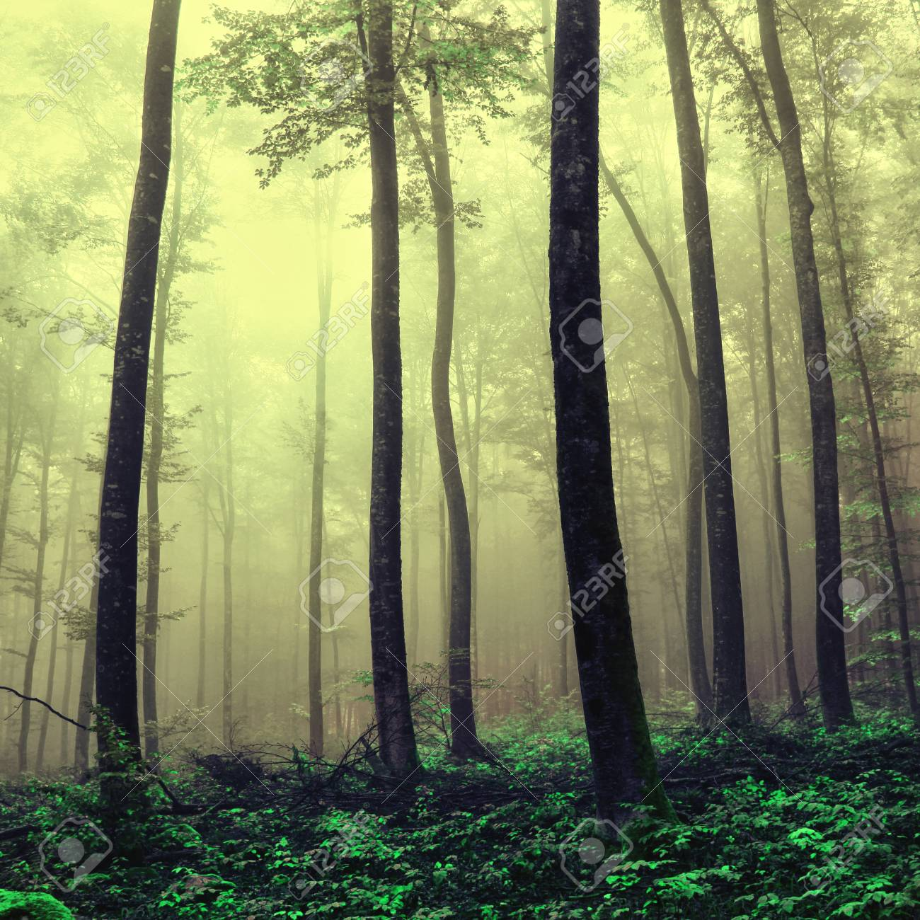 Foggy fantasy yellow green forest trees color filter effect used stock photo 64596179
