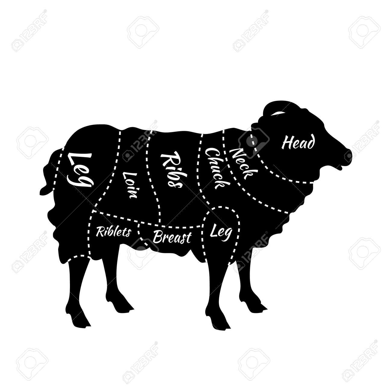 cuts of lamb  british cuts of lamb or mutton diagram  butcher cuts scheme  of lamb  lamb or mutton cuts diagram  detailed diagram, scheme or chart of  english