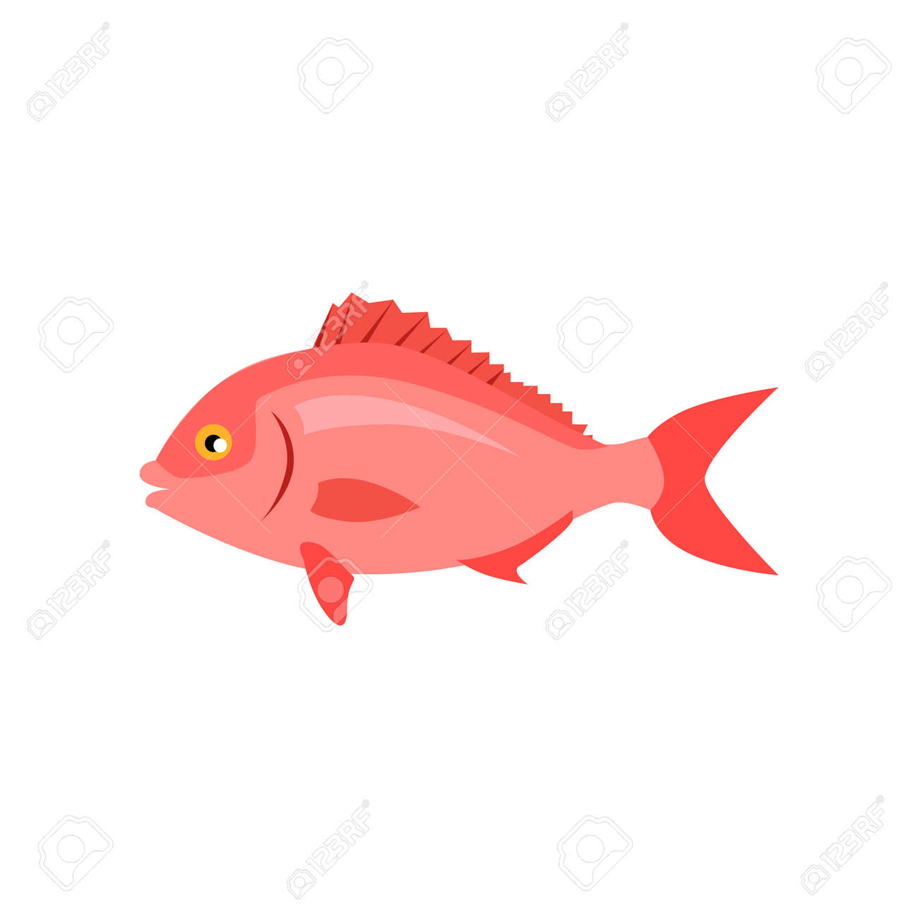 Sea Fish In Pink Color Isolated. Beautiful Fish With A Tail Fin ...