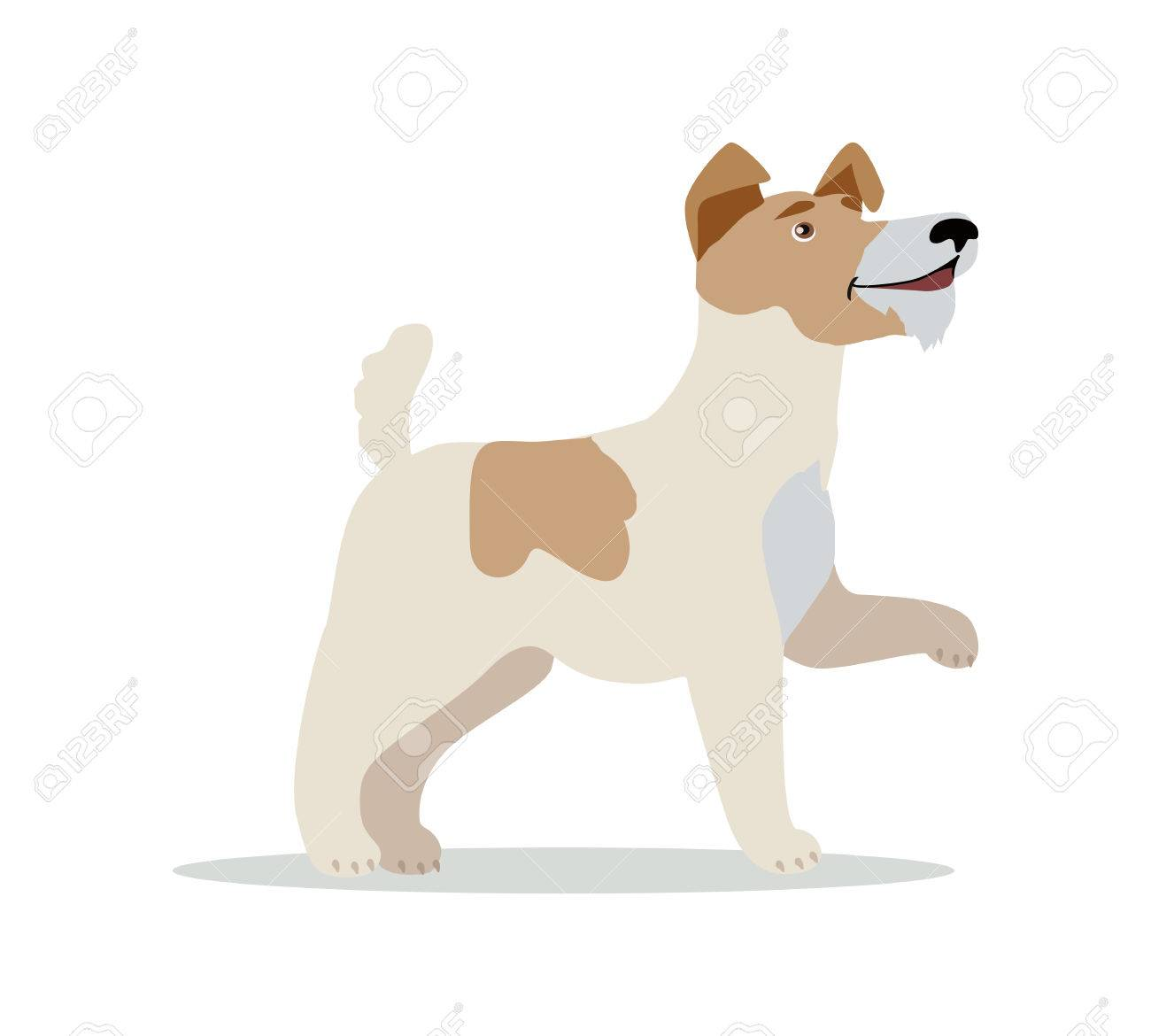Smooth Fox Terrier Dog Breed Isolated On White. Wire Fox Terrier ...