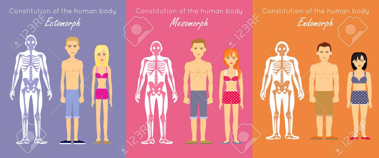 Der Menschliche Körper Verfassung Vektor-Konzept. Flaches Design ...