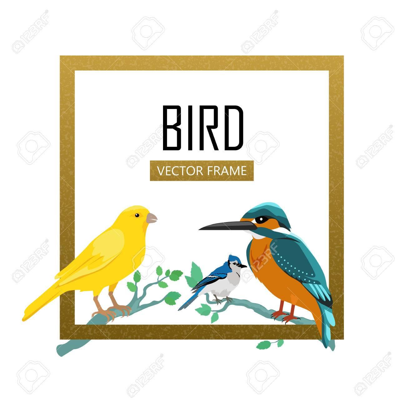 Vögel Rahmen Vektor. Farbige Tierwelt Konzept In Flacher Bauweise ...
