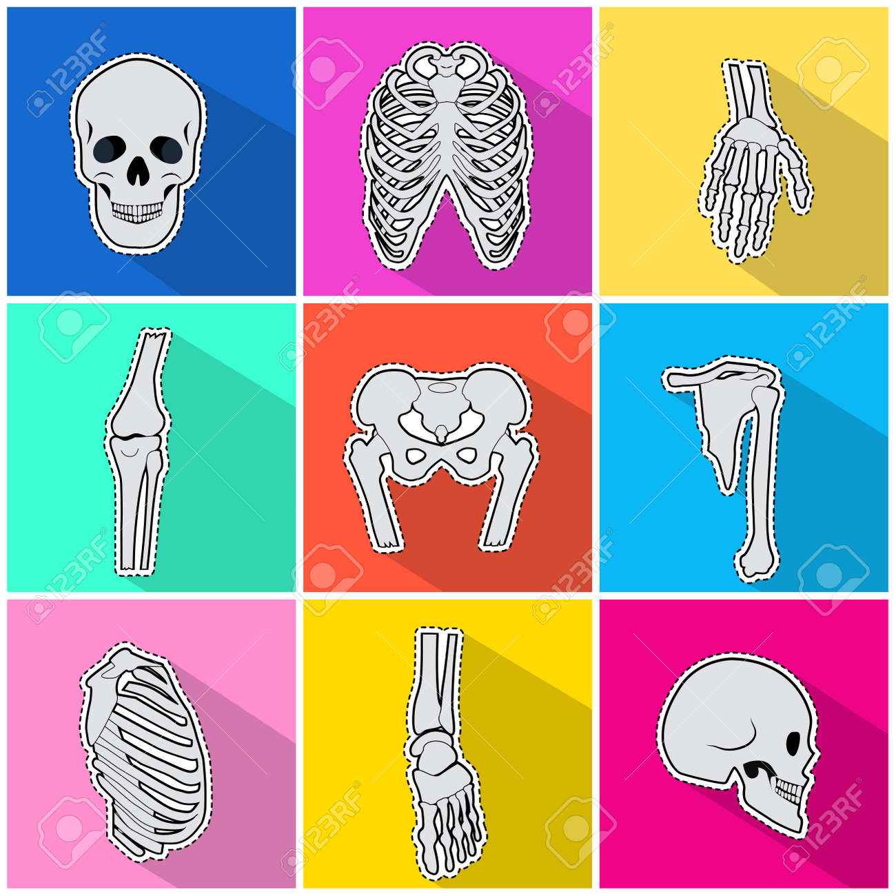 Skeleton Icons Set Types Of Human Bones On Bright Background