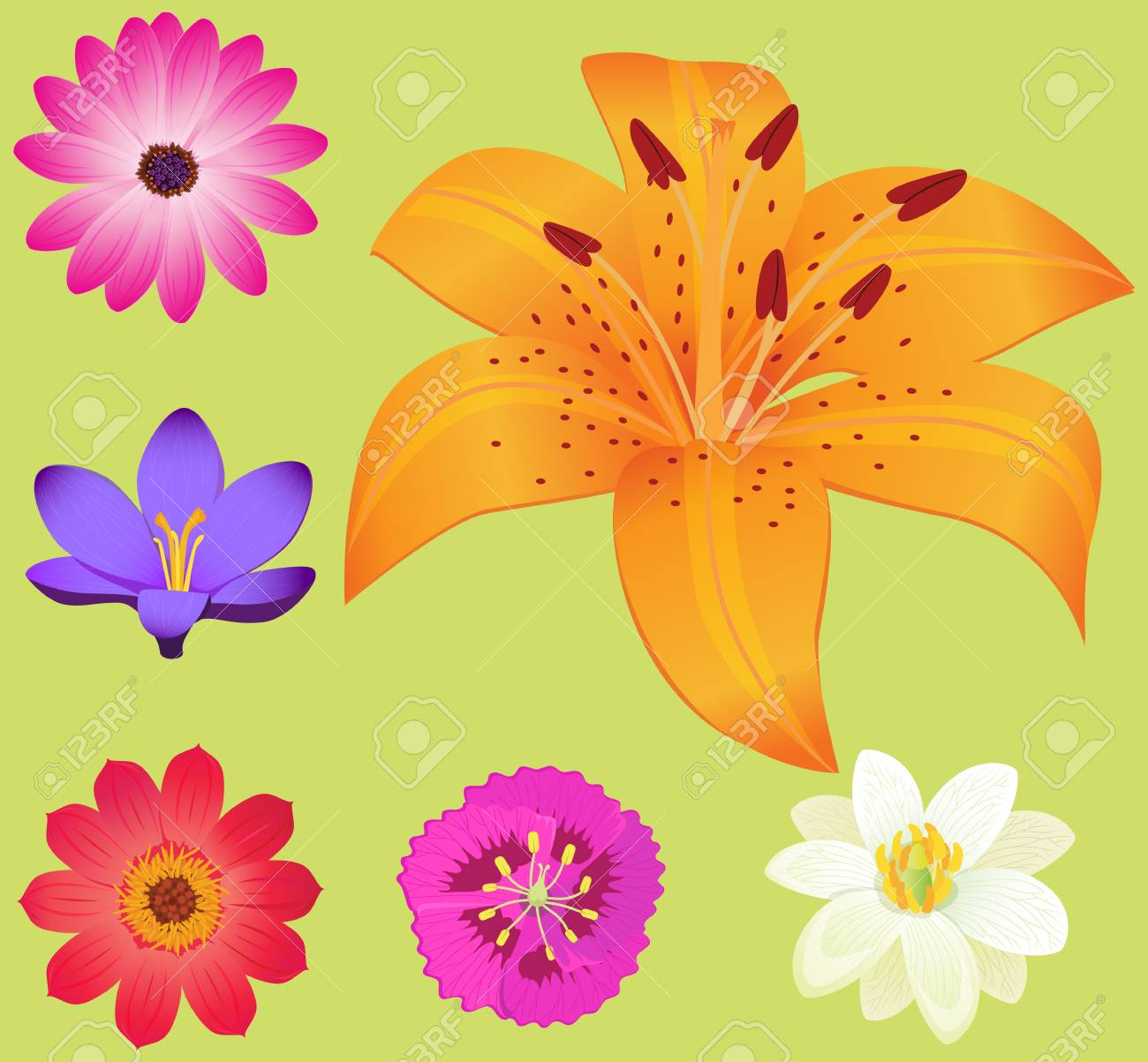 Yellow lily flower with smaller blossoms poster royalty free vector yellow lily flower with smaller blossoms poster izmirmasajfo