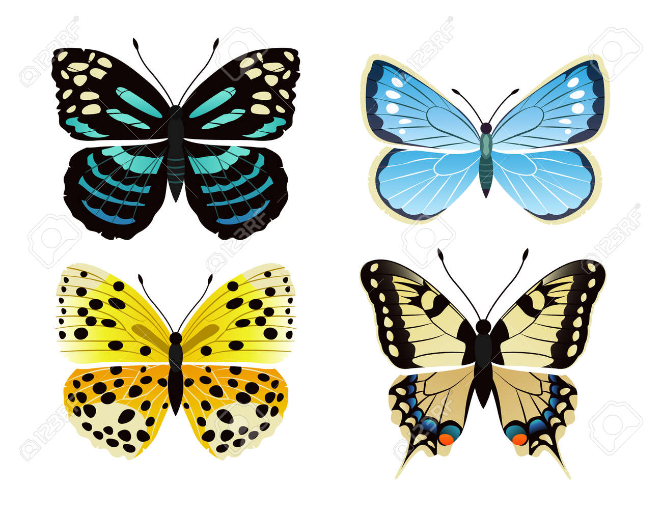 Butterflies Types Set Of Creatures Kinds Of Butterflies Lycaena Royalty Free Cliparts Vectors And Stock Illustration Image 104295344