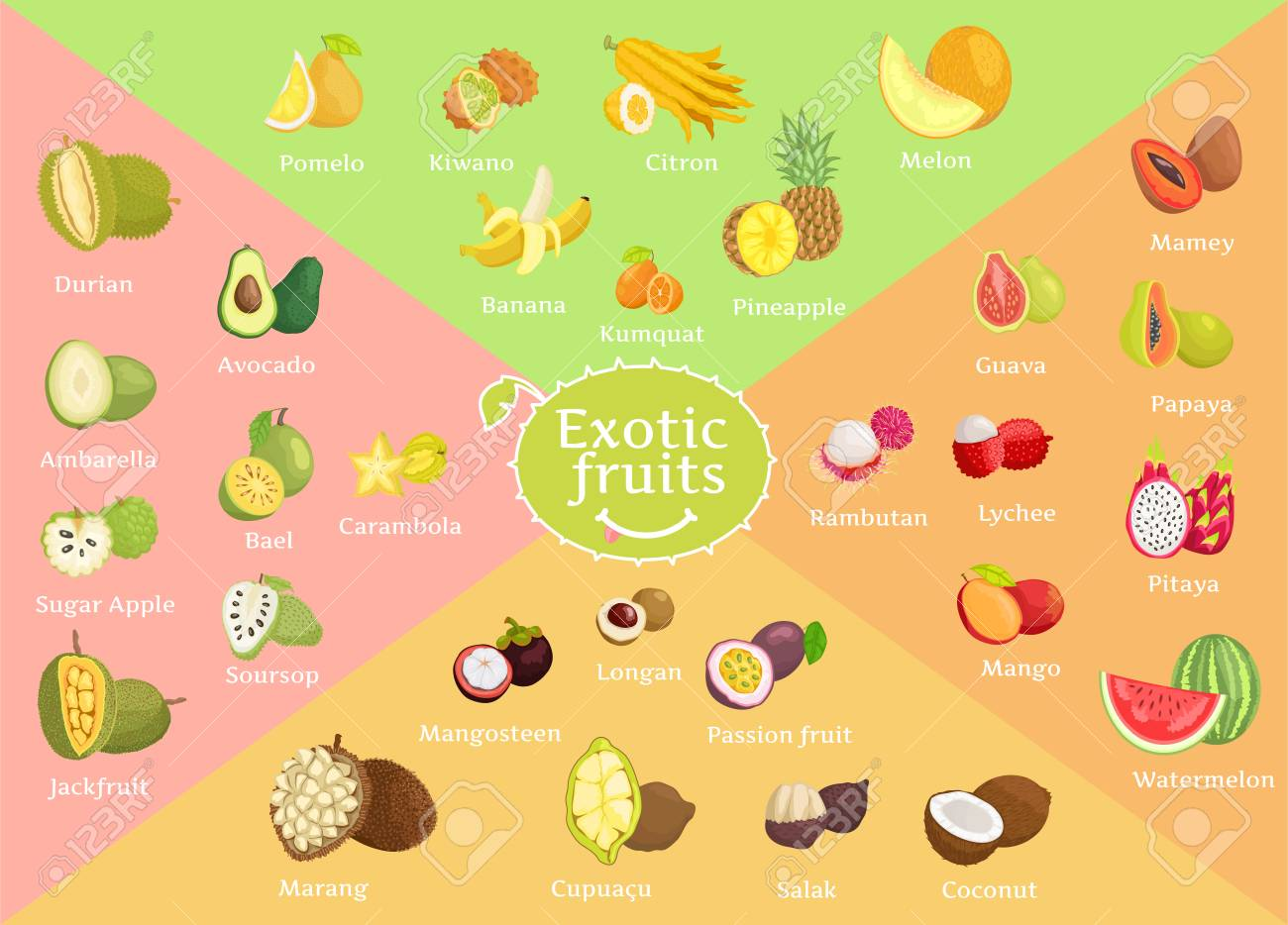 Exotic Fruits Collection Color Vector Illustration - 106315660