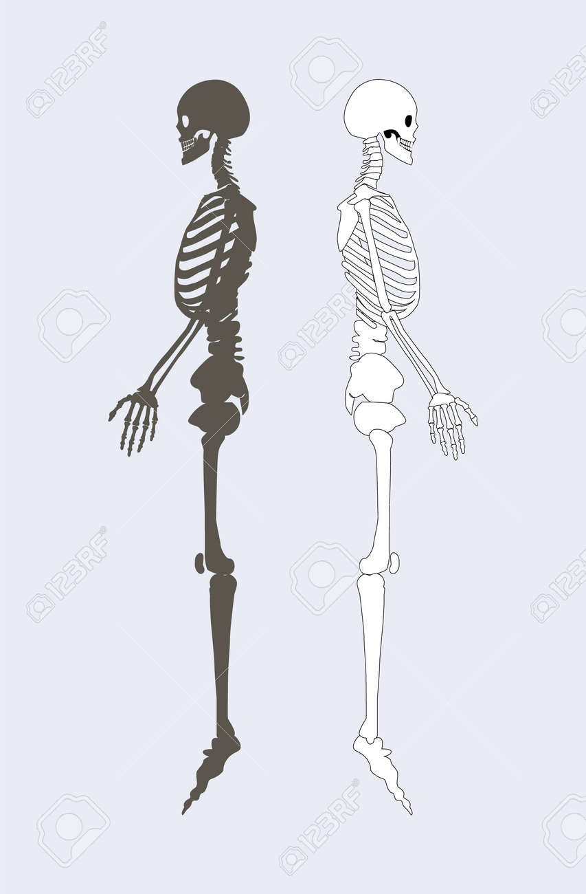 Skeletal System Of Human Body Black And White Skeletons Profile