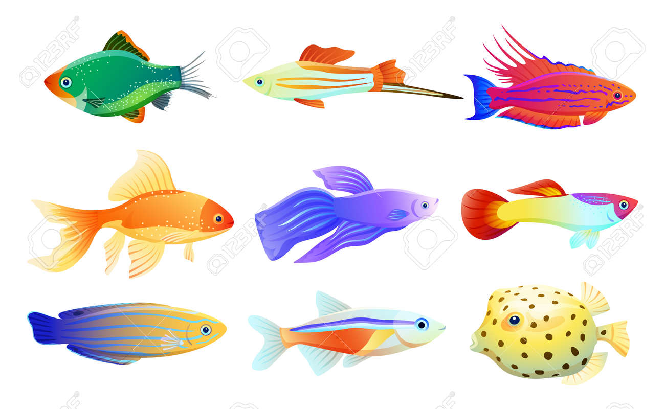 Common and rare different coloration and size aquarium inhabitant specie. Goldfish and tamarin wrasse, boxfish and tetra neon vector illustration. - 110758188