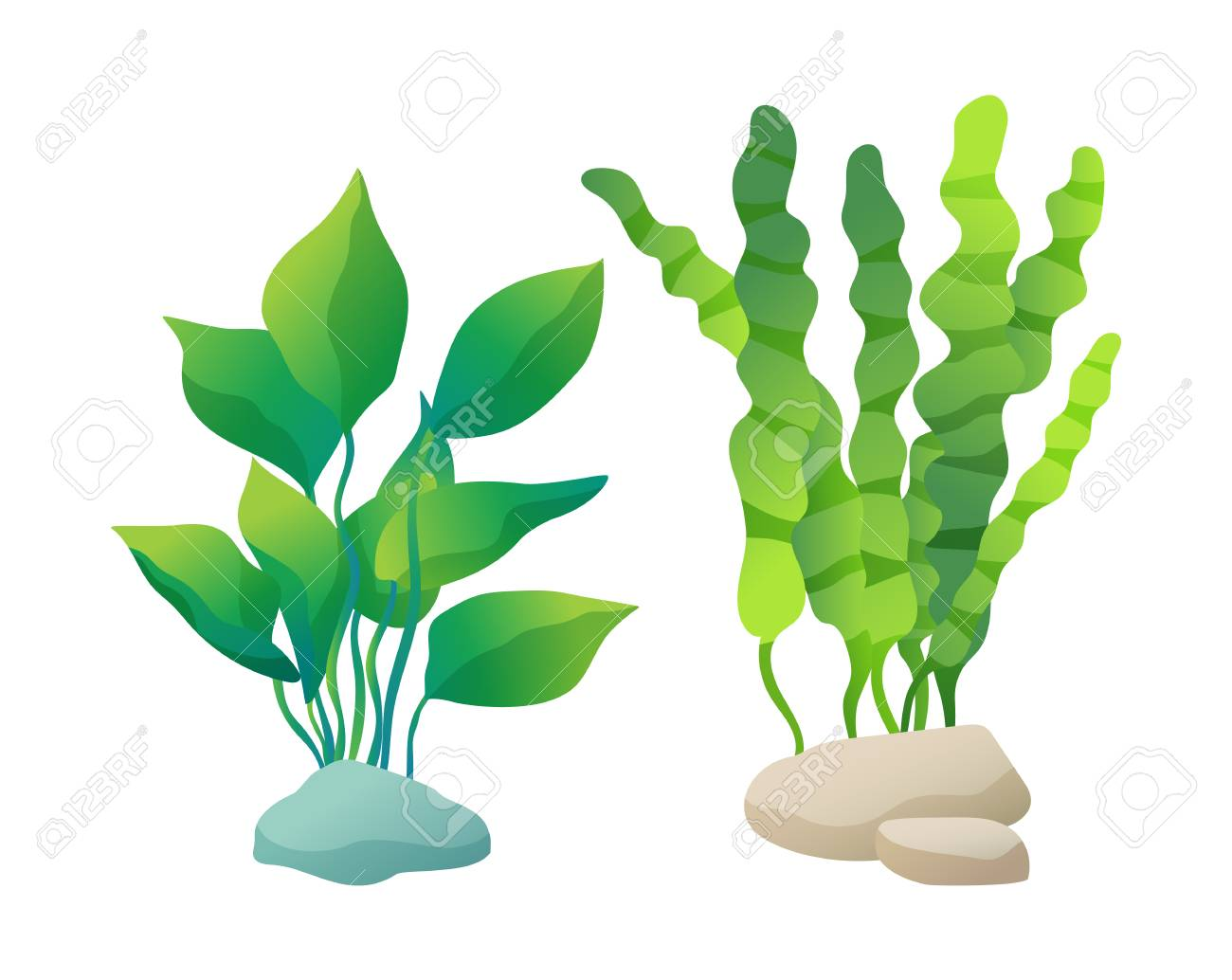 Sea or aquarium algae types vector illustration set on white. Straight and wavy seaweed with large and small leaved, green and violet colored poster. - 110930226